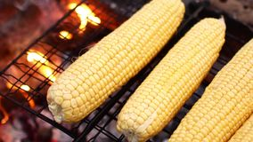 Słodka kukurudza na grillu zbiory wideo
