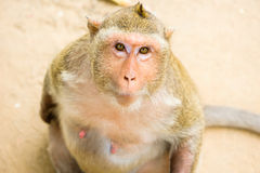 słodka mała małpka Obrazy Stock