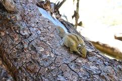 słodka mała wiewiórka zdjęcie stock