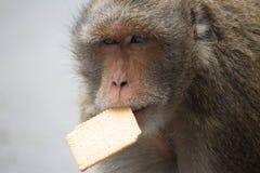 słodka małpka Zdjęcie Royalty Free