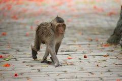 słodka małpka Fotografia Stock