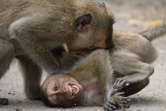 słodka małpka Zdjęcia Royalty Free