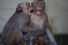 słodka małpka Zdjęcie Stock