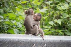 słodka małpka Fotografia Royalty Free