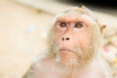 słodka małpka Obraz Stock