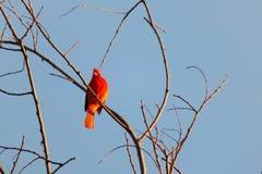 Słodka piosenka od natury zdjęcie royalty free