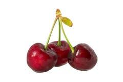 Słodka wiśnia. Obrazy Royalty Free
