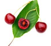 Słodka wiśnia obrazy stock