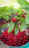 Słodka wiśnia w pucharze na stole z liśćmi Fotografia Stock