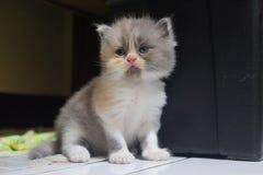 słodka wyrażenie kotku zdjęcie stock