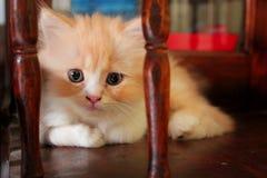słodka wyrażenie kotku obraz stock