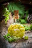 Słodki ajerkoniak robić agresty i alkohol w lesie Obraz Stock