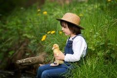 Słodki dziecko, bawić się na małej rzece z kaczątkami Zdjęcie Stock