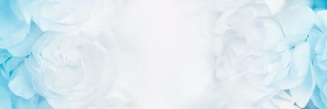 Słodki koloru goździk w miękkiej części i plamy stylowym tle Zdjęcie Royalty Free
