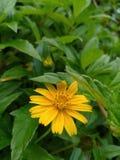 słodki kwiat zdjęcia stock