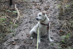 Słodki mały pies zdjęcia stock