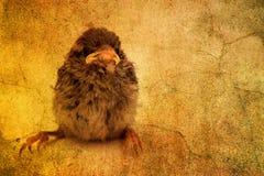 słodki mały ptak Zdjęcia Royalty Free