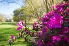 Słodki wiosna czas obrazy stock