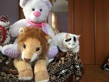 Słodkie śliczne zabawki zdjęcie royalty free