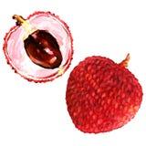 Słodkie świeże lychees owoc zamykają w górę odosobnionego, akwareli ilustracja Zdjęcia Royalty Free
