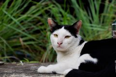 słodkie czarnego kota, white obrazy royalty free