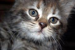 słodkie młode kotów Obrazy Stock