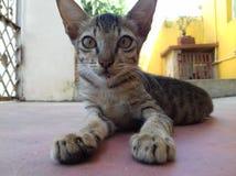 słodkie małe kota Obrazy Stock