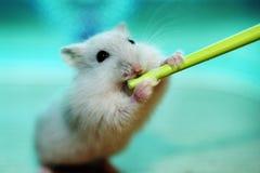 słodkie zwierzątko Zdjęcia Stock