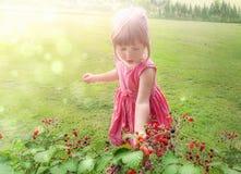 Słodkiej małej dziewczynki zbieracka malinka Zdjęcie Royalty Free