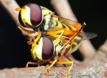 Słodowniczy insekt zdjęcia stock