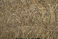 Słomiani traw tła obrazy stock