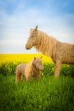 Słomiany koń Fotografia Royalty Free