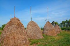 Słomy grupa w ryżu polu Fotografia Royalty Free