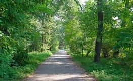 Słoneczna ścieżka w lato lesie obraz royalty free