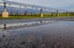 Słoneczna roślina odbija na wodzie po deszczu Zdjęcie Stock
