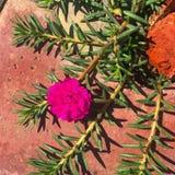 Słonecznego dnia stuknięcia kwiat Zdjęcie Royalty Free
