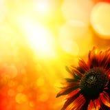 Słonecznik. Obrazy Royalty Free
