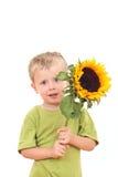 - słonecznik zdjęcia royalty free
