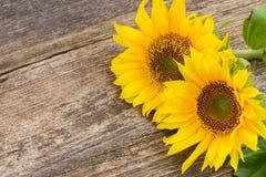 słonecznik bright Zdjęcia Royalty Free