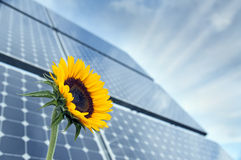 Słonecznik i panel słoneczny z światłem słonecznym Obrazy Royalty Free