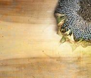Słonecznik na drewnianym tle Obrazy Royalty Free