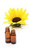 słonecznik oleju fotografia royalty free