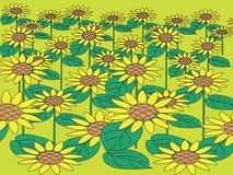 słonecznik pola ilustracji