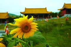 Słonecznik przed chińską świątynią Obrazy Stock