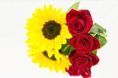 Słonecznik róży lustro obrazy royalty free