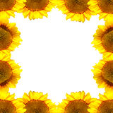 Słonecznik rama Zdjęcie Stock