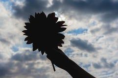 Słonecznik w ręce przeciw pięknemu nieba tłu zdjęcie stock