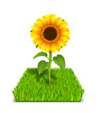 Słonecznik w zielonej trawie ilustracja wektor
