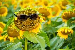 Słonecznik z szkłami i uśmiechem Obrazy Royalty Free