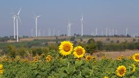 Słonecznika śródpolny silnik wiatrowy produkujący alternatywną energię zbiory wideo
